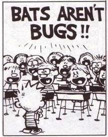 batsarentbugs
