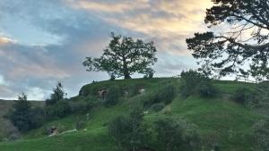 hobbiton-bilbos-tree